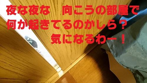 DSC_5798.jpg