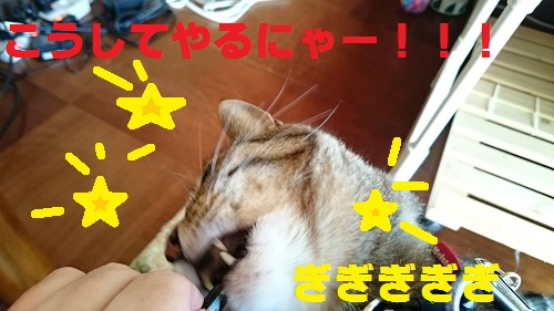DSC_5941.jpg