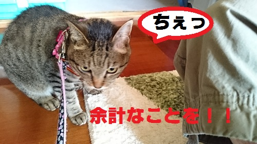 DSC_6235.jpg