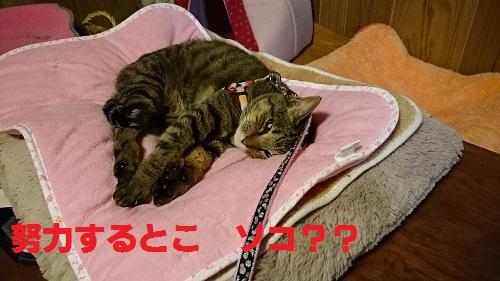 DSC_6731.jpg
