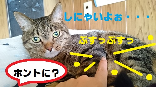 DSC_6786.jpg