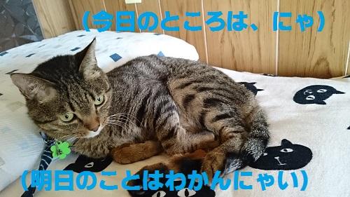DSC_6788.jpg