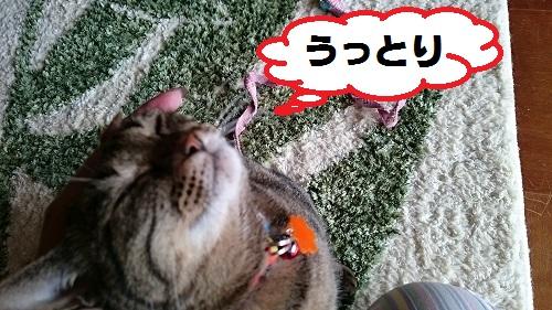 DSC_6838.jpg