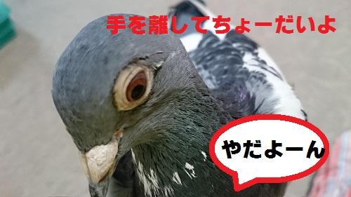 DSC_6994.jpg