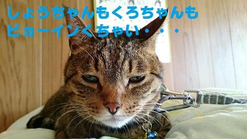 DSC_7351.jpg