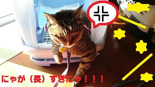DSC_8016.jpg