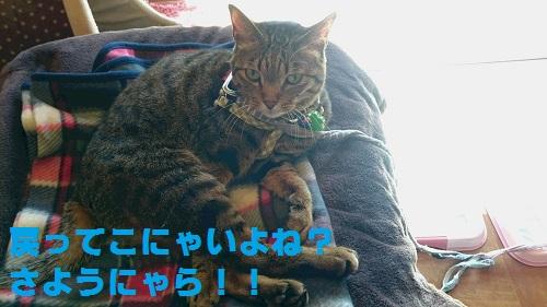 DSC_8226.jpg