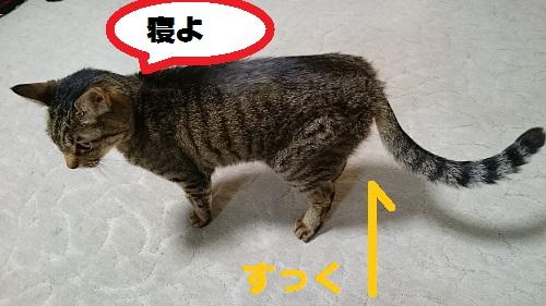 DSC_9321.jpg