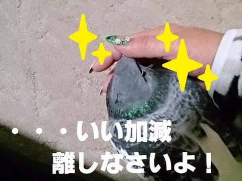 IMG_20141206_232613.jpg