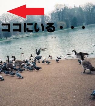 park 4d.jpg