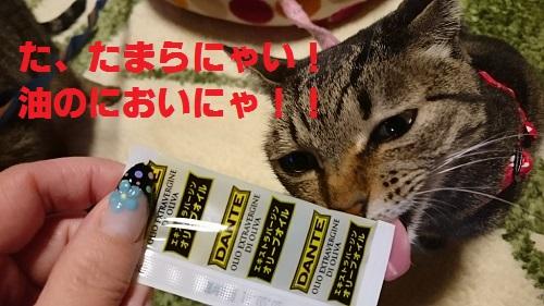 misudo4.jpg