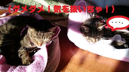 syoukuro3.jpg