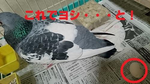 DSC_6130.jpg