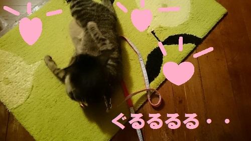 DSC_6141.jpg