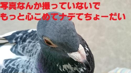 DSC_6436.jpg