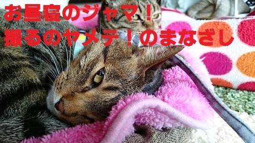 DSC_6522.jpg