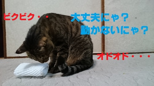 DSC_7073.jpg