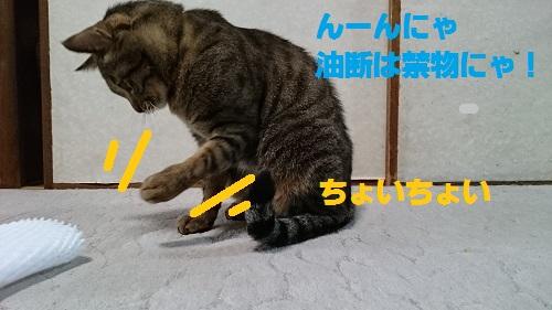 DSC_7075.jpg