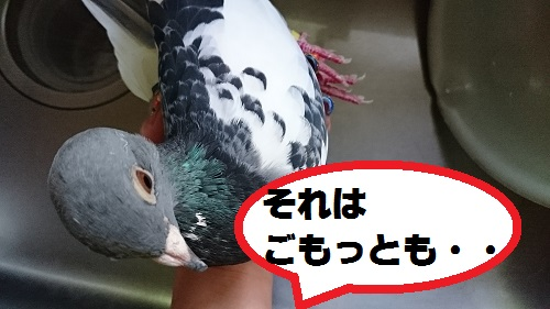 DSC_7130.jpg