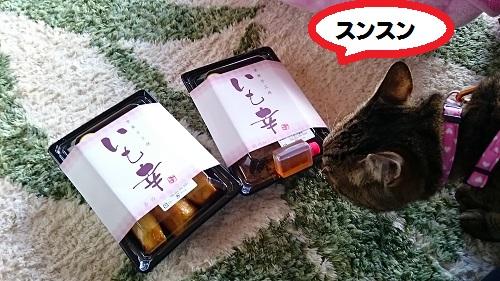 DSC_8027.jpg