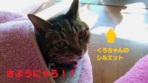 DSC_8221.jpg