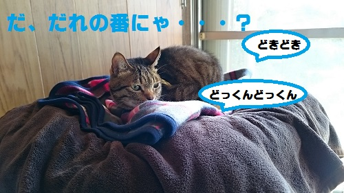 DSC_8283.jpg