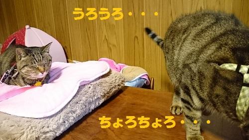 DSC_8357.jpg