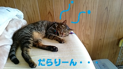 DSC_8978.jpg