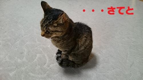 DSC_9322.jpg