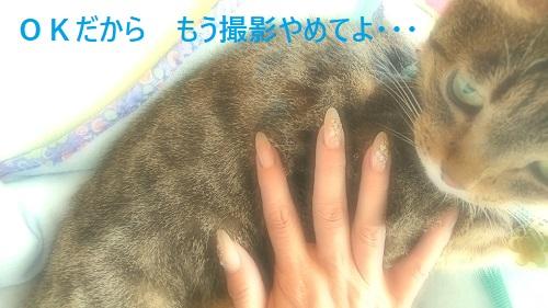 daiiyaiay.jpg