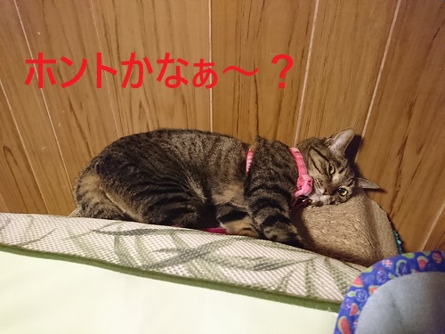 honntokana.jpg