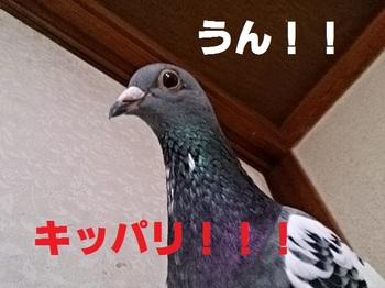 DSC_4958.jpg