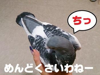 IMG_20131023_215141.jpg