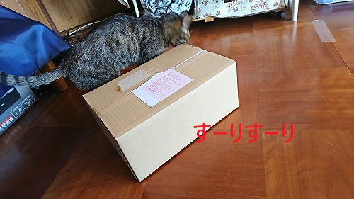 su-risu-ri.jpg