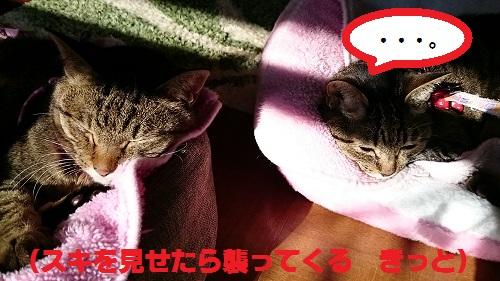 syoukuro4.jpg